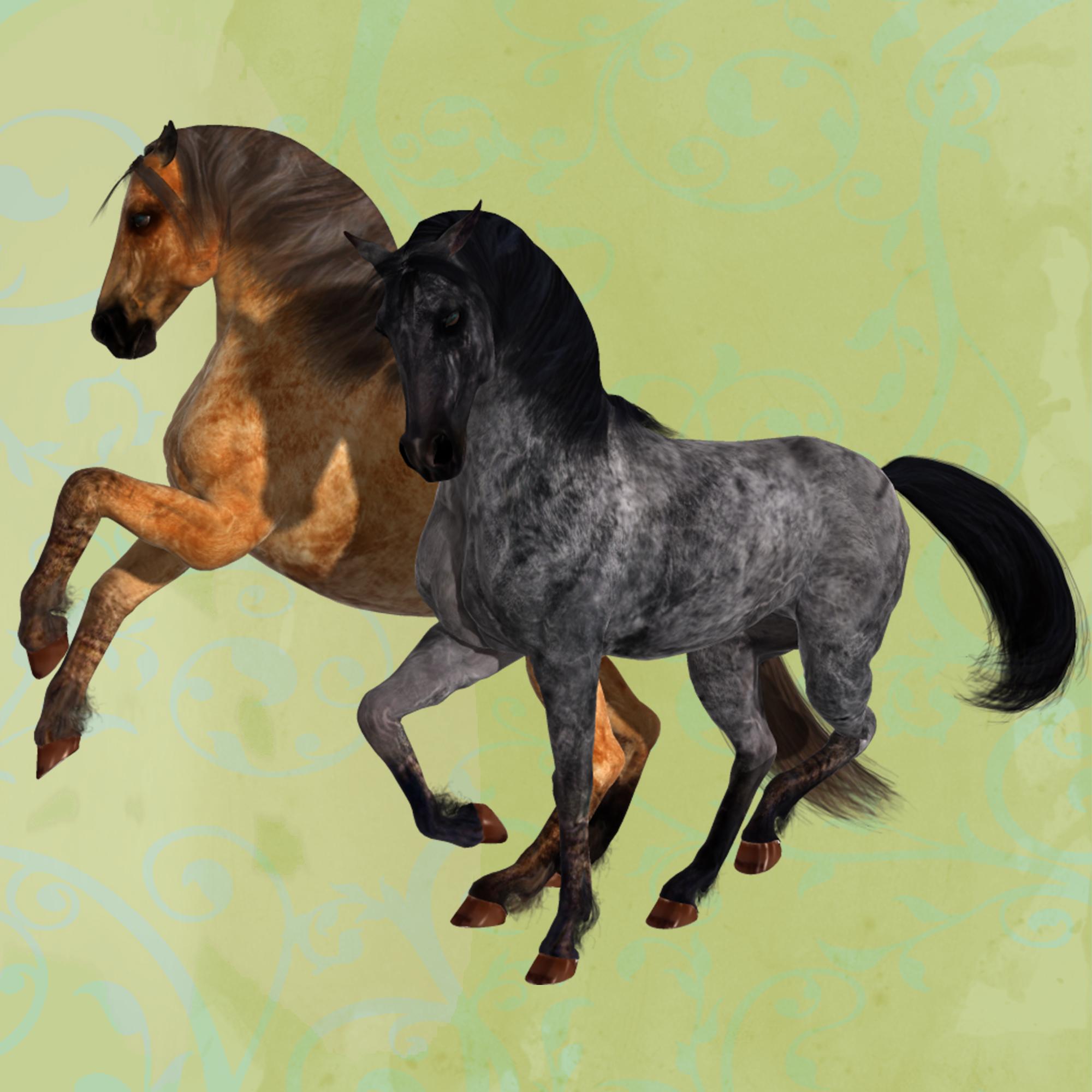 Duns Horse Coats