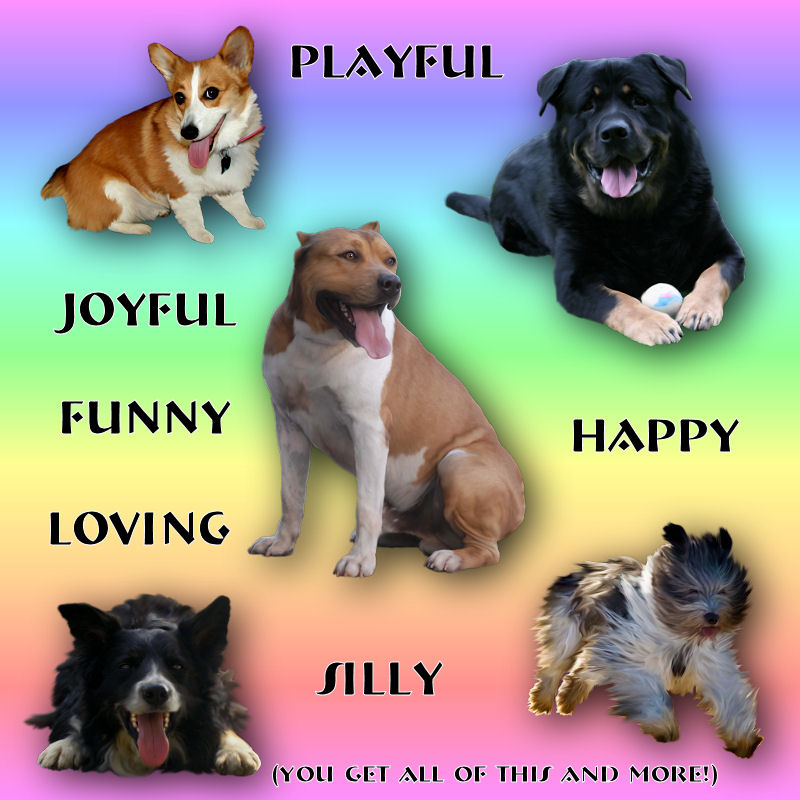 Tame Happy Dogs *Exc.* - Click Image to Close