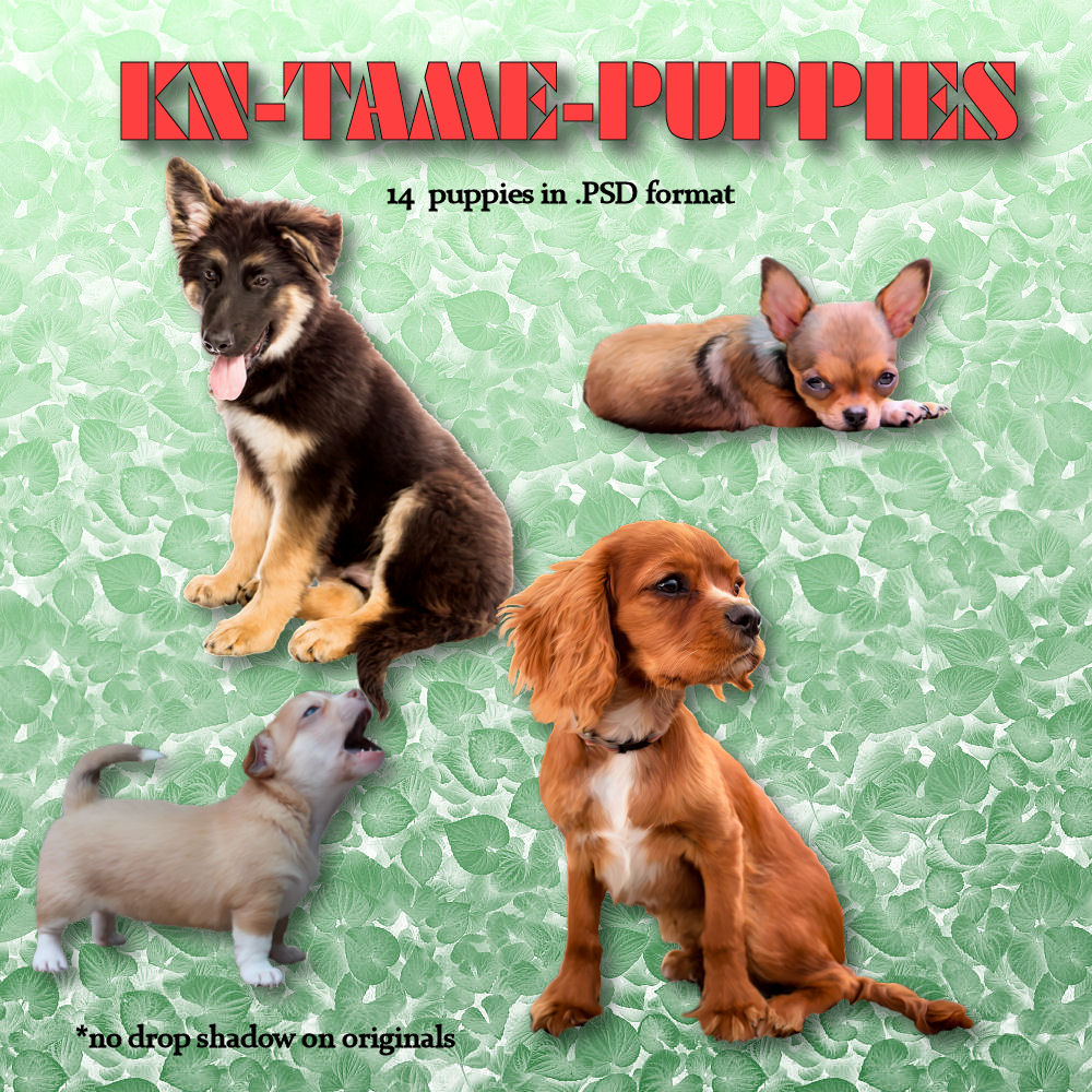 KN Tame Puppies [Exclusive]