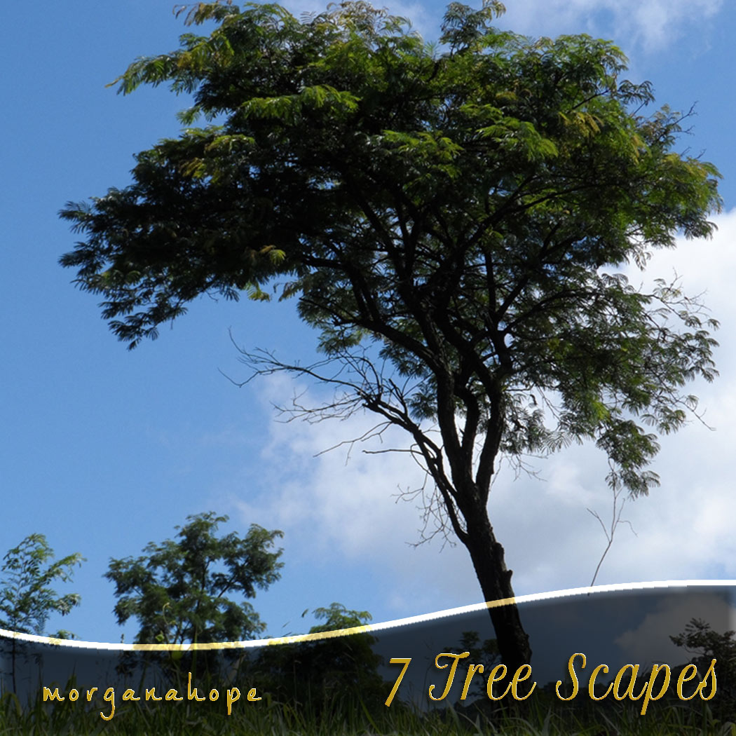 MH Tree Scapes [Exclusive]